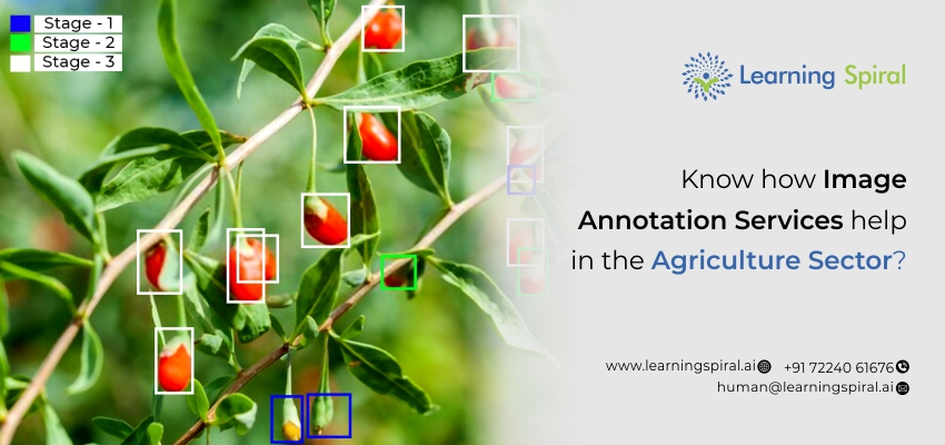 image_annotation_services_help_in_the_agriculture_sector
